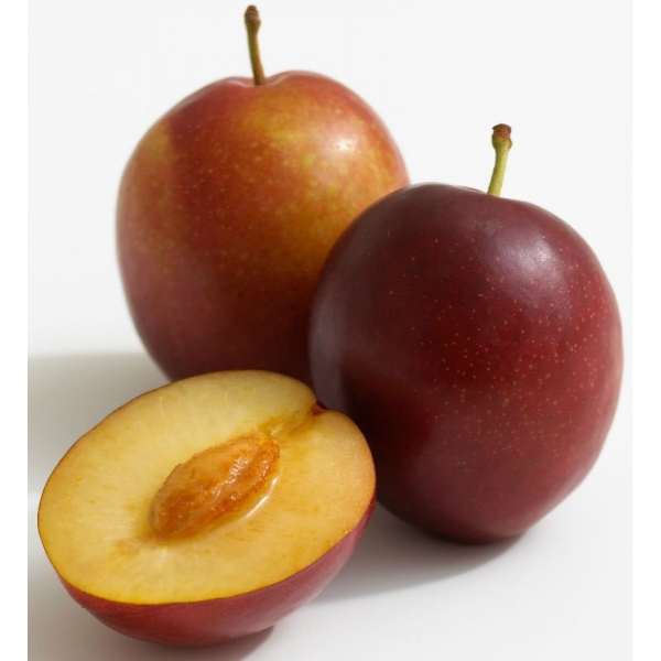 Fresh Plum Photo, Detailed about Fresh Plum