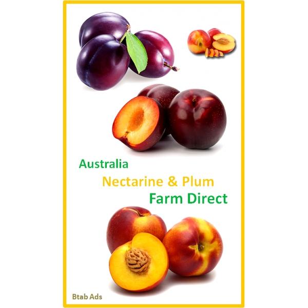 Australia Nectarine & Plum